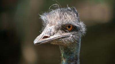 Птицы, кролики и черепашки: фоторепортаж с ростовского «Страусиного подворья»