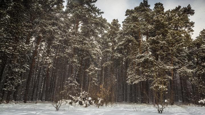 Мэрии Новосибирска рекомендовали снять с торгов долгострой в Заельцовском бору