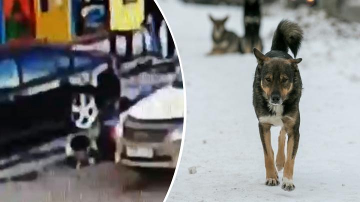 «Стая, хуже агрессивных собак»: мнение красноярки о травле матери покусанного собакой мальчика