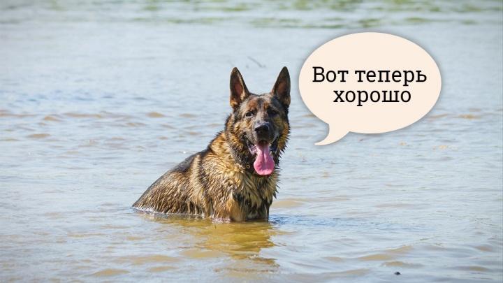 Пять правил хорошего хозяина: как помочь собакам в жару