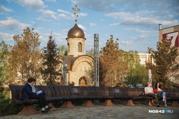 Многие кемеровчане обратили внимание на то, что сосны этой весной пожелтели