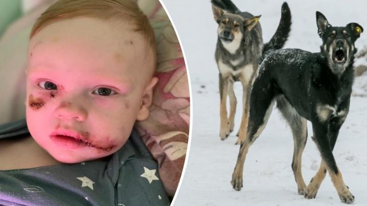 Виновных ищут в УДИБе: уголовное дело возбудили из-за нападения биркованного пса на двухлетнего мальчика