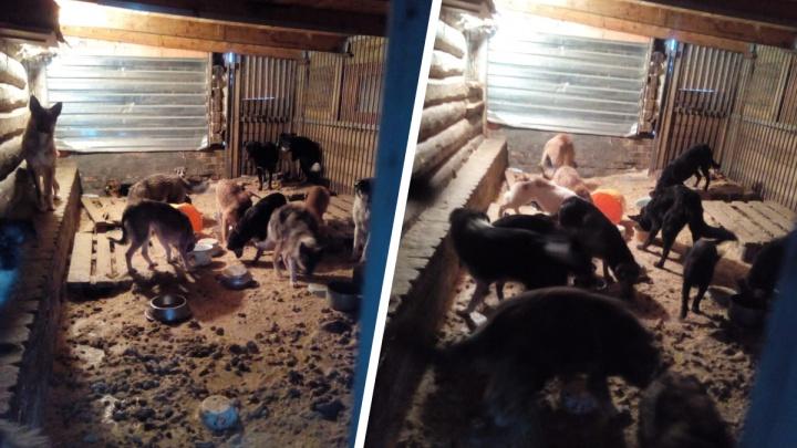 Приют животных оставил в пункте стерилизации два десятка собак — их не забирают с прошлого года