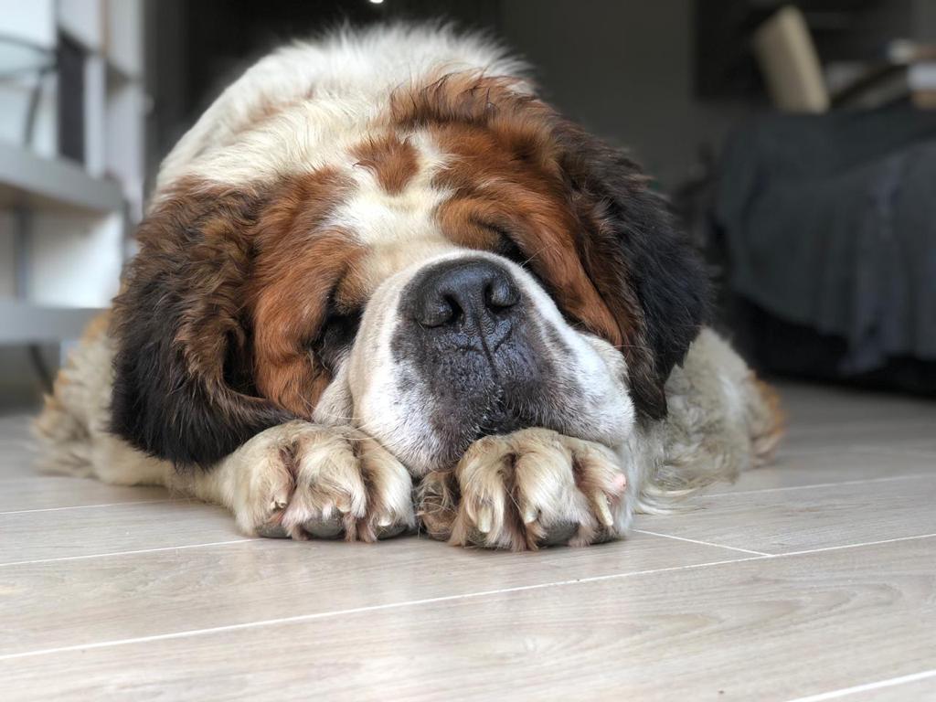Бон спит по 20 часов в сутки