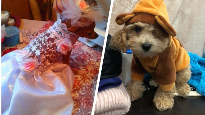 Собака-невеста и пес-хулиган: как екатеринбуржцы одевают своих питомцев на прогулки