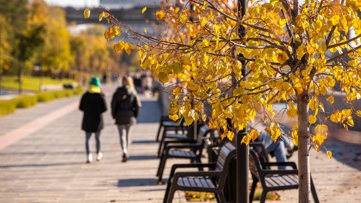 В Новосибирск пришло солнце! 10 кадров цветных листьев и гуляющих горожан