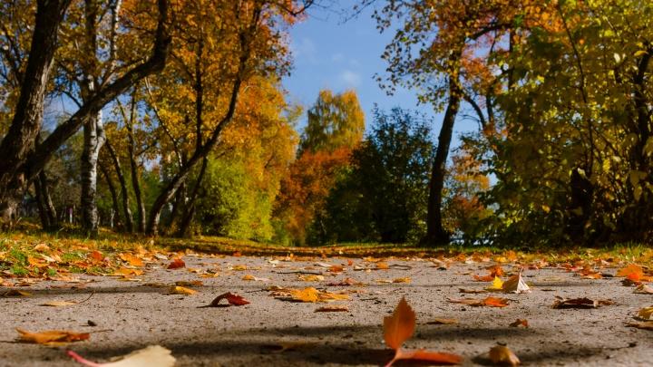 Цвет настроения — осень: смотрим, как красиво Архангельск наряжается в желто-красные тона