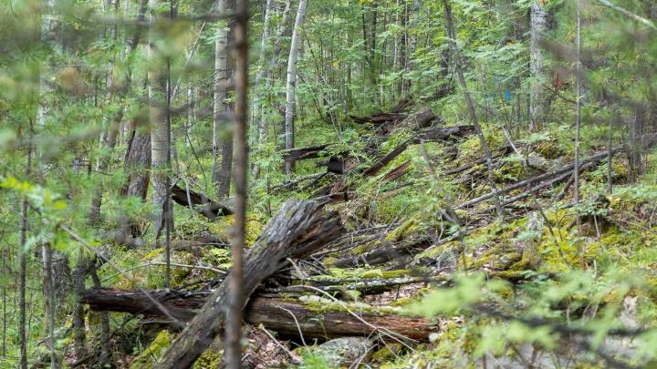 Не валежником единым: губернатор пообещал раздавать отходы лесопиления нуждающимся