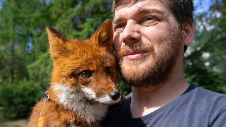 «Люди думают, что это шпиц». Екатеринбуржец выкупил лису на пушной ферме и поселил у себя дома