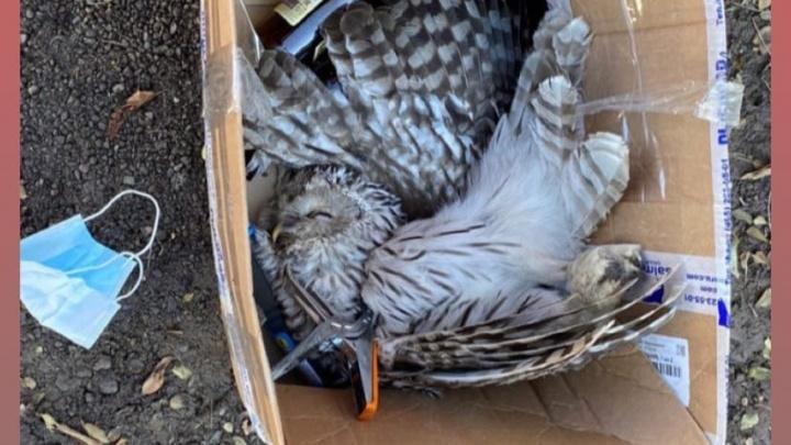 В Солнечном жестоко убили сову степлером