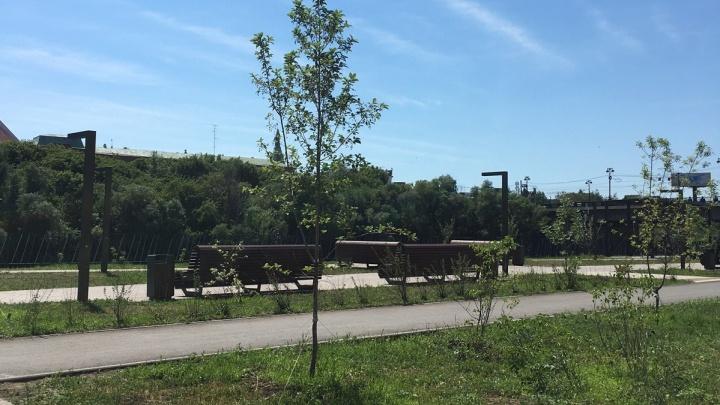 Вдоль новой дороги на улице Чехова высадят иву и черемуху