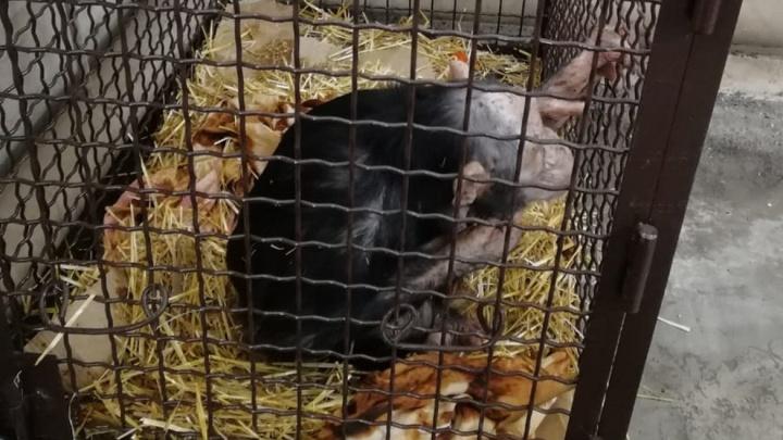 Полицейские под Волгоградом приютили замерзающих обезьян