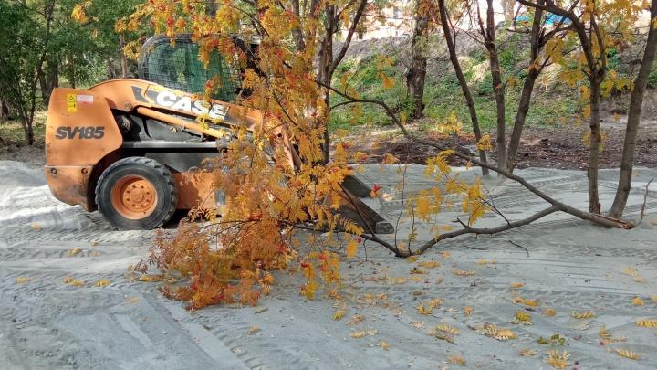 Бульдозерист сломал дерево на «Зеленом острове», переделывая площадку для кормления белок