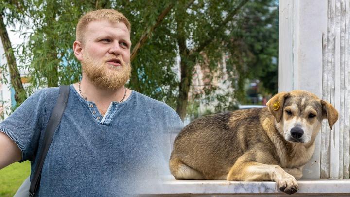 Нападают не от хорошей жизни: самарский кинолог — о том, почему система отлова собак не работает