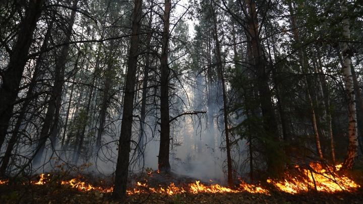 Уральский врач рассказала, чем опасен смог от пожара на Волчихе