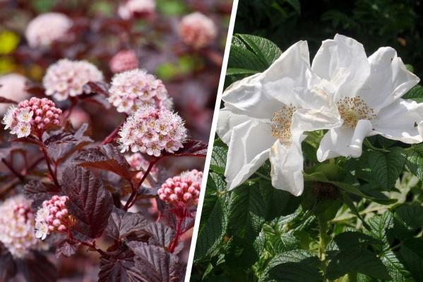 Красивый сад без больших затрат времени и сил — мечта любого садовода