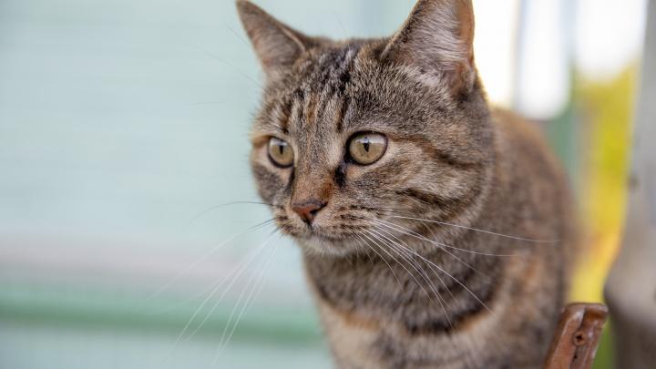 Хозяйке стало плохо: в Ярославской области женщина жестоко убила соседскую кошку