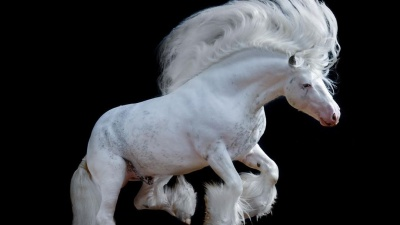 Рамзан Кадыров подарил дочке на день рождения породистого коня из Кузбасса