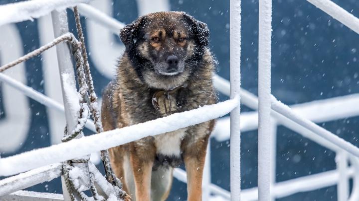 Морозы до -20°C сохранятся в Ростове до марта — Гидрометцентр