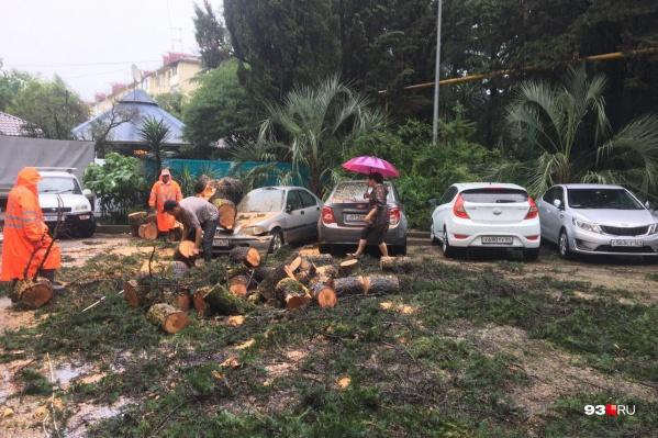 Накануне в Сочи упавшее дерево убило человека. Многие водители думают, что на его месте мог оказаться кто угодно