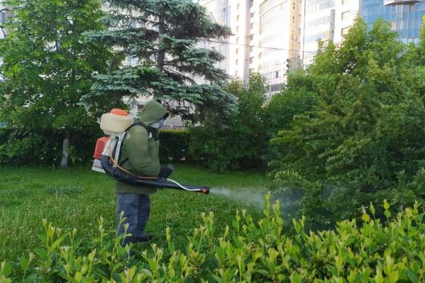 Состав наносят на траву, кустарники и нижние ветки деревьев