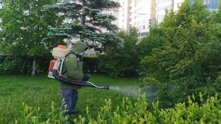 В Самаре начали обрабатывать от комаров парки и набережную