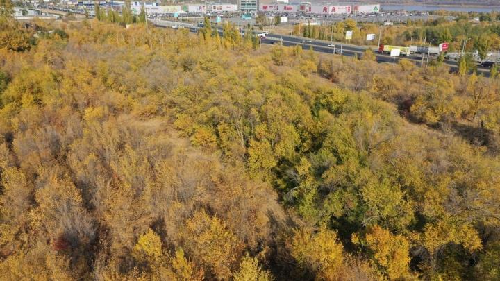 В Волгограде пустят под застройку лес, где ликвидировали двух боевиков