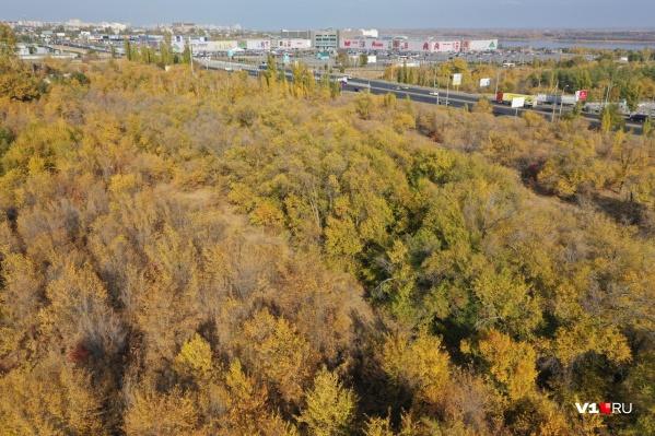Вместо деревьев вдоль Второй Продольной могут вырасти коттеджи