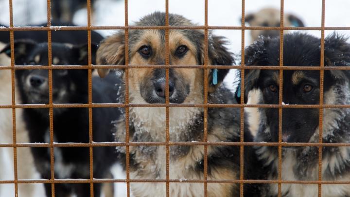 В Волгоградской области активистов направят на борьбу с бездомными животными