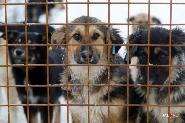 Биркованных, а значит, относительно безопасных для человека бездомных собак — всего чуть более пяти процентов популяции