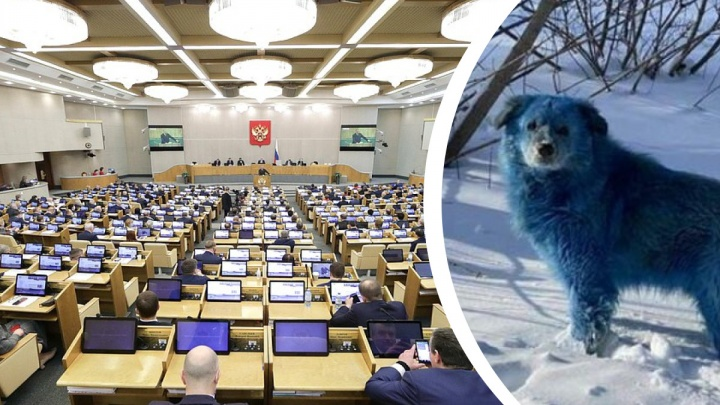 Депутаты Госдумы выяснят, почему по Дзержинску бегали собаки с синей шерстью