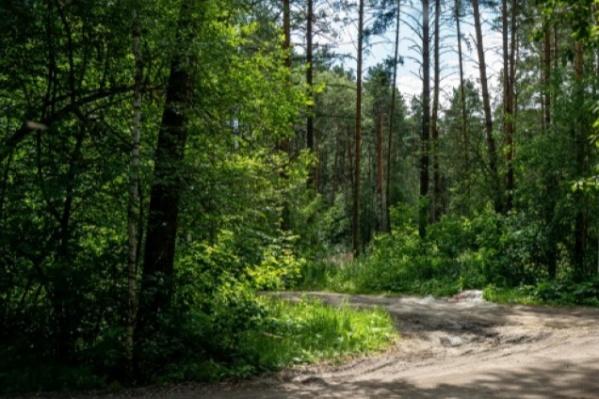 Для Новосибирска важно сохранить нетронутые зеленые зоны