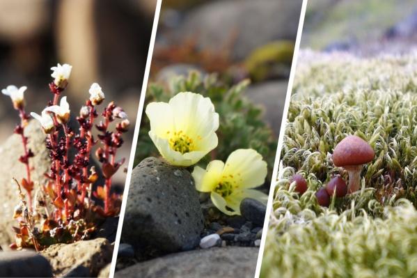 Цветы, мох, грибы — все это исследователи Арктики видят в летнее время