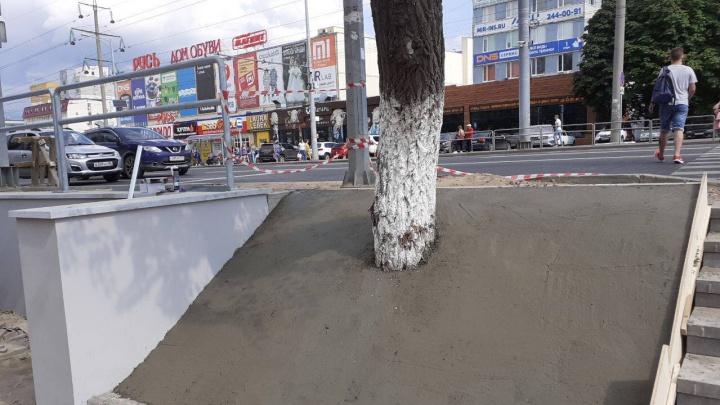 В Самаре деревья вдоль Московского шоссе закатали в цемент