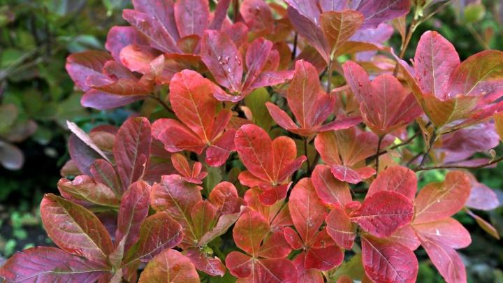 Посадите их прямо сейчас: самые эффектные кустарники для дачи, которые раскрасят хмурую осень