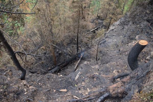 На Усьве горел сухой лес