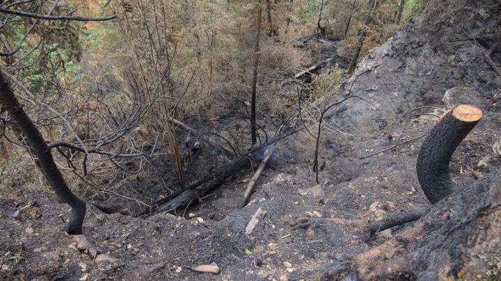 «Природе нужен отдых от человека»: туристов просят не посещать Усьвинские столбы, пострадавшие от пожара
