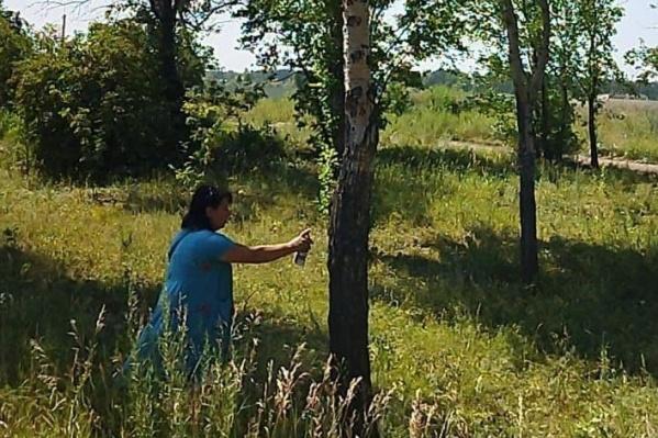 Засохшие деревья отметили, пилить начнут уже на этой неделе