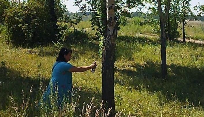 На гостевом маршруте в Челябинске вырубят 18 засохших деревьев. И это только начало