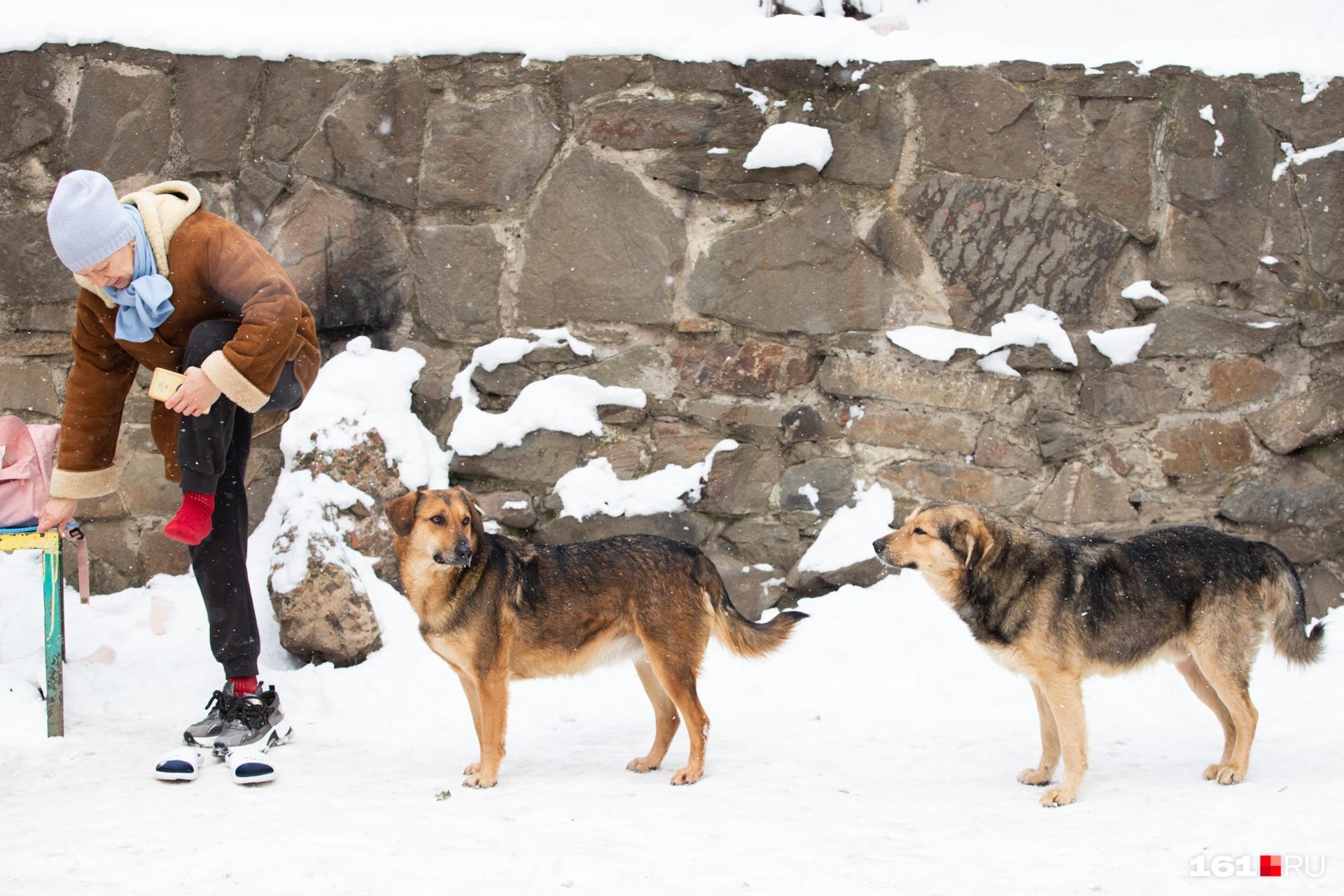 Местные собаки послушно ждут своей очереди