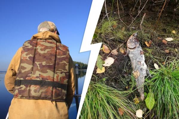 После нереста горбуша умирает. Живую ловить закон позволяет только на рыболовных участках, но на реках в Мезенском районе их больше нет