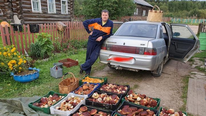 «Режь кучи и грузи в машину»: архангелогородец за один выезд собрал почти 100 кг грибов