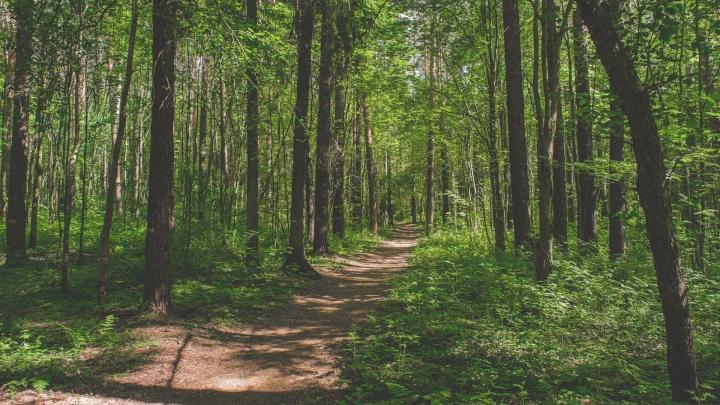 В Перми организуют новую экологическую тропу и место отдыха для гуляющих — в микрорайоне Новые Ляды