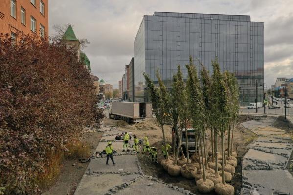 Новая зеленая рекреация сможет стать излюбленным местом отдыха горожан