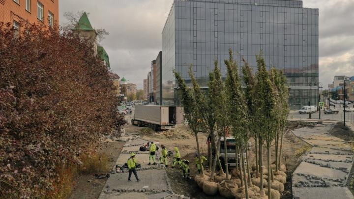 Черемуха из Нидерландов и барбарис из Польши: в центре Тюмени начали строить новый сквер