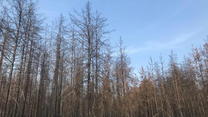 Тюменские власти потратили полмиллиарда рублей на тушение лесных пожаров