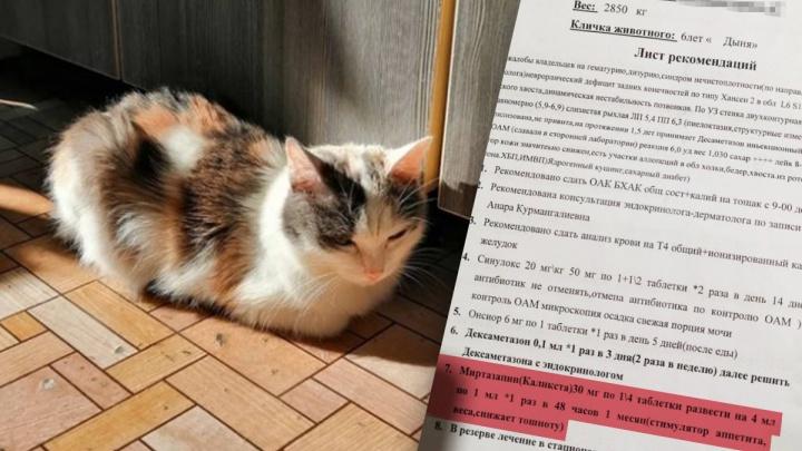 Требуют справку психиатра: тюменские фармацевты отказались продать лекарства для больной кошки
