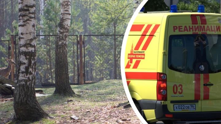 Женщина, на которую на уральской оленьей ферме рухнула береза, погибла