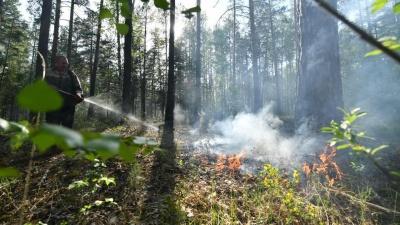 В Свердловской области полностью запретили посещение лесов