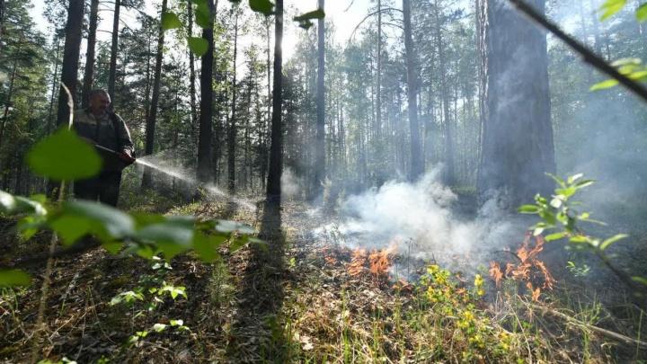 Лесной пожар в пригороде Екатеринбурга видно из космоса